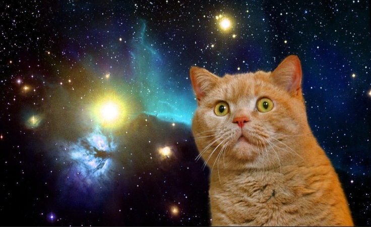 23452_funny_cat_in_space